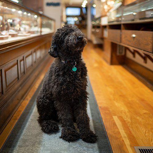 Morgan McCoy in Shop